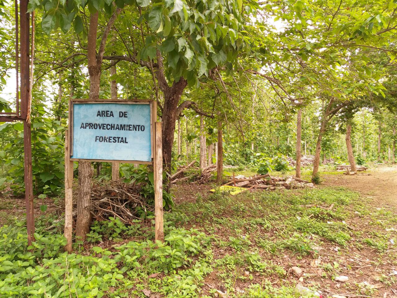 Este aviso, ubicado en la ye entre Palmira y Pajonalito, es el primero que se ve en la zona en la que fueron sembradas más de 500 hectáreas de tierra que antes eran usadas para ganadería y agricultura.