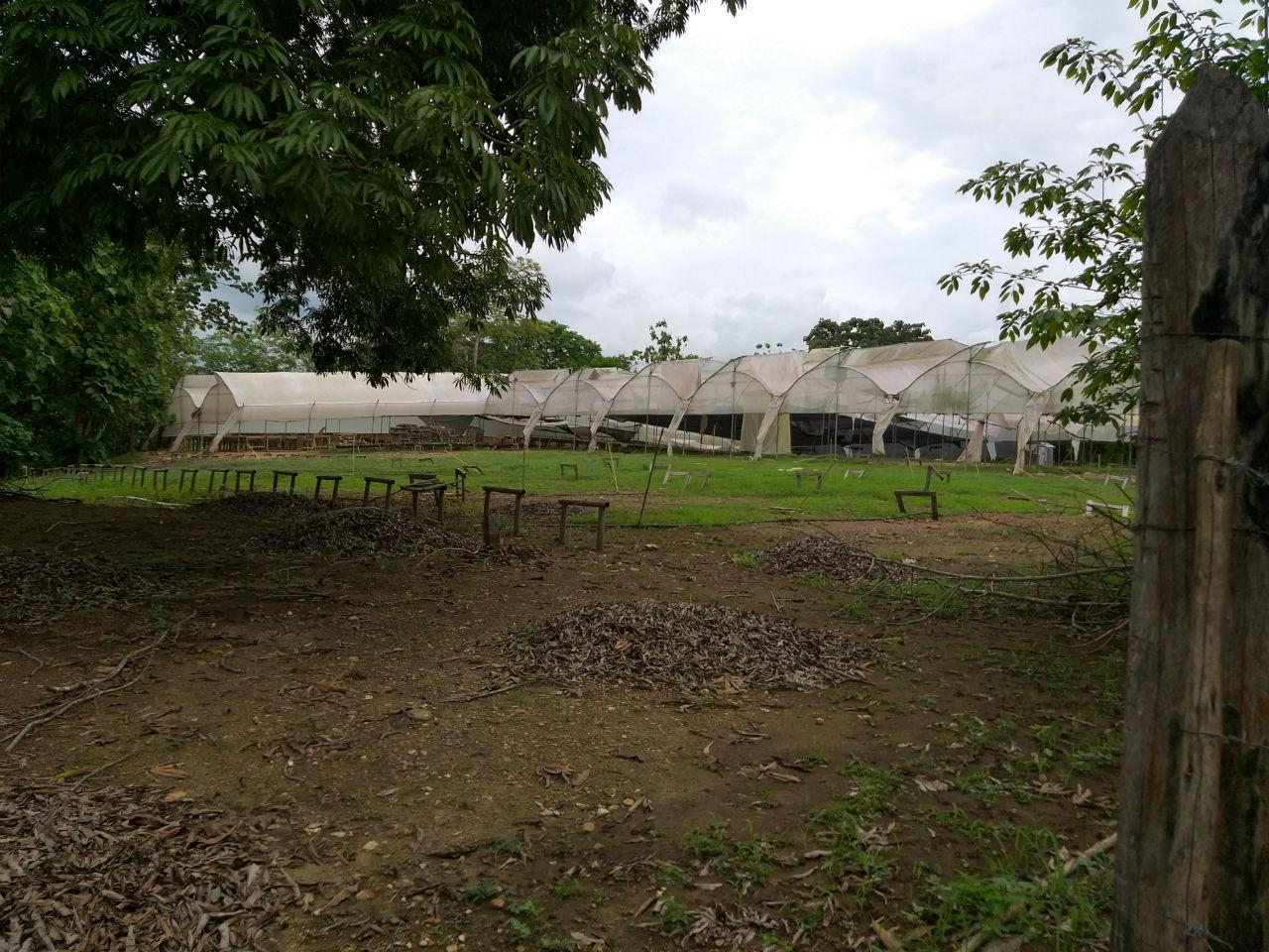 En este punto, a la entrada del corregimiento y donde antes quedaba la finca La Holanda, funcionó desde 2007 el centro de producción forestal de Tekia. Hoy, cuando ya la compañía debe devolver los predios, se ve abandonado.