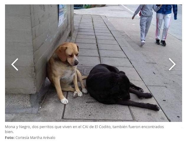 Verdadera foto perritos Cai Codito