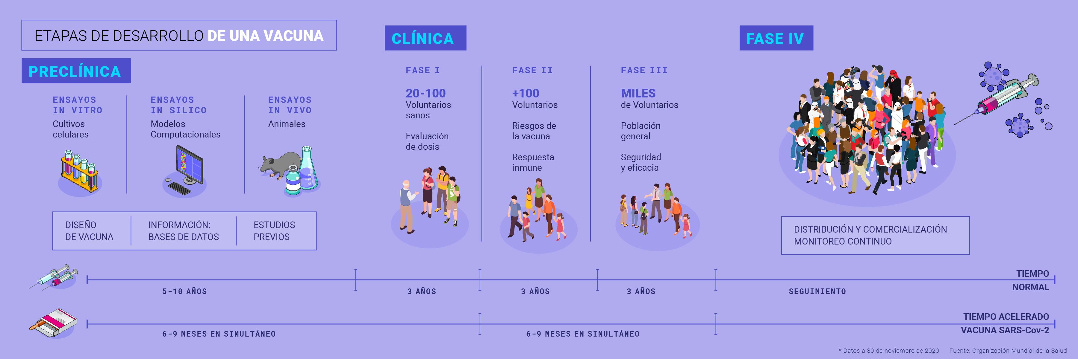 fases dllo de una vacuna